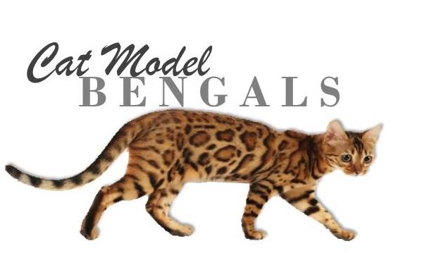 Cat Model Bengals